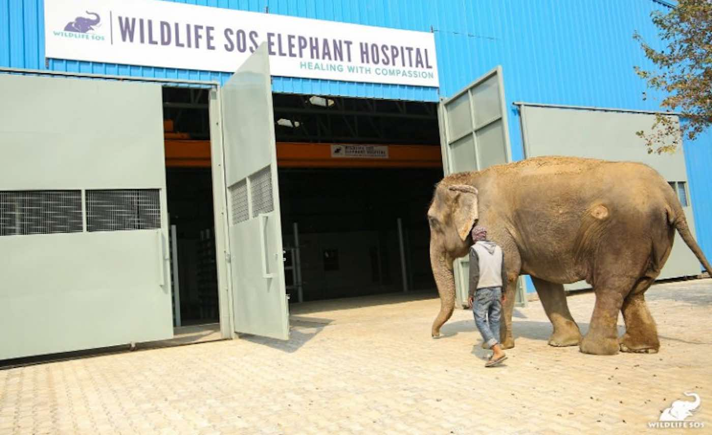 Elephant and Wildlife SOS Animal Hospital WildlifeSOS Animal Hospital